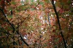 Stroll (Laura-Lynn Petrick) Tags: flowers plants nature gardens 35mm garden flora gardening trippy psychedelic torontogardens lauralynnpetrick lauralynnpetricktoronto lauralynnpetrickfilm lauralynnpetricknature lauralynnpetrickautumn newyorkneighbourhood lauralynnpetricktorontogardens lauralynnpetrick35mmgardens