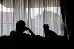 16:52 (phixated) Tags: shadow summer portrait dog selfportrait cute me yorkie window girl silhouette self dark puppy photography photo nikon photographer yorkshire terrier weeks 52 52weeks 52weeksproject 52weeksofphotography phixated 52weeks2016