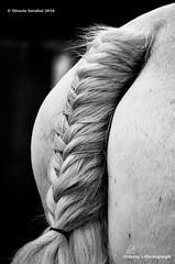Ottavia Serafini 2016 (Ottavia Serafini) Tags: blackandwhite white black detail nikon details dettagli nikkor whitehorse braid dettaglio treccia