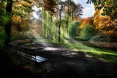 Park Banch with Sunrays (George Nevrela) Tags: nature landscape sunrays sonnenstrahlen parkbank herbstbume parklandschaft parkbanch