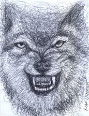 lobo a lapicero (ivanutrera) Tags: wild animal pen sketch drawing wildlife lobo draw dibujo lapicero boligrafo dibujoalapicero dibujoenboligrafo