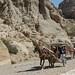 Horse drawn carts, West Bank