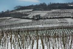 ... i vigneti di Belfort.. (antosti) Tags: nikon d70s cielo neve francia freddo belfort collina vigneti alsazia