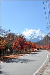 79 (Joe Nathan78) Tags: autumn tree fall japan automne fuji mountfuji japon