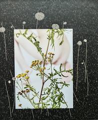 Urine Mate 2, 2015 (CORMA) Tags: brussels art europe belgique bruxelles exhibition exposition artcontemporain 2016 tourtaxis alinebouvy