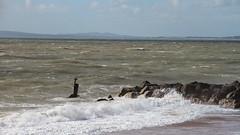 Rough Sea 9780 (Thorbard) Tags: sea seascape storm coast rocks waves dorset groyne bournemouth rugged englanduk canonefs1585mmf3556isusm hengustburyhead