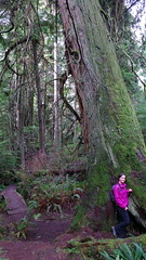 KristinCedar (EnduroDoug) Tags: beach hiking whidbeyisland oldgrowth cedartree