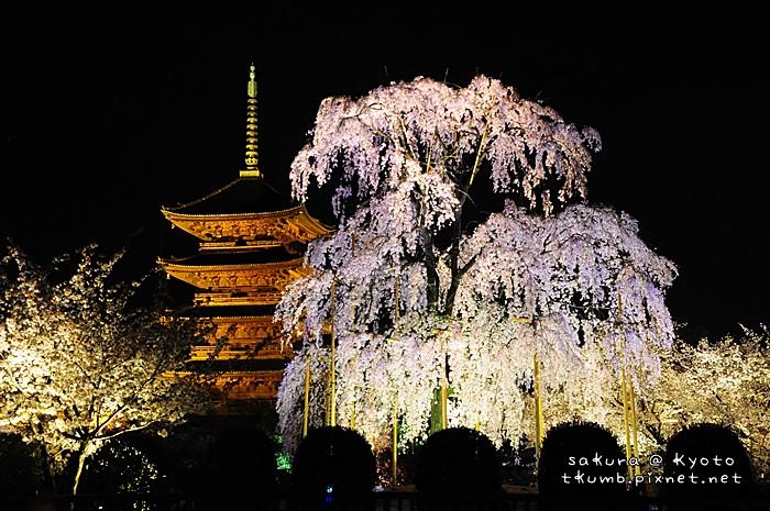 2014東寺夜櫻 (4).jpg