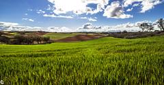 Poemas de tonos verdes... (carmen.fdez.mtnez) Tags: primavera paisaje nwn lerma camposdecastilla carmenfernndez
