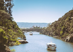 Hobart and Friends (judexvalentine) Tags: travel mountain australia wanderlust tasmania hobart cradle