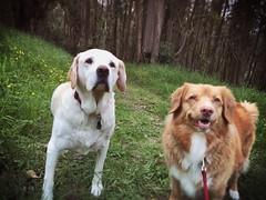 Bailey & Tess (Kristen Sague) Tags: bailey tess beautifuldog dogwalking dogphotography happydog dogportraits dogtraining sanfranciscodog dogadventure doggylamapetcare thecutestdogintheworld oaklanddog bayareadog thehappiestdogintheworld petcarebayarepetcare oaklandpetcare berkeleypetcare eastbaypetcare