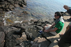 IMG_7654 (chupalo) Tags: sealions lavarocks islasplaza