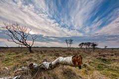Vlieland, the Netherlands (Lex Vermeend Photo's) Tags: trees sunset nature netherlands waddenzee sunrise vlieland wadden waddeneiland bomen nederland wolken wad nederlands waddensea staatsbosbeheer nederlandnetherlands
