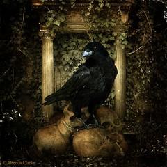 Animal-Antics-Ch4 (~Brenda-Starr~) Tags: skulls raven allrightsreserved april2016