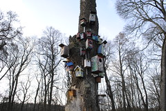 Birdhouses (modestmoze) Tags: park blue trees winter red brown white house bird nature yellow clouds forest outside outdoors colorful day clear boxes treeline birdhouses 2016