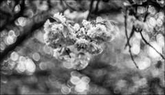 summarex, sed lex (Paucal) Tags: leica de 85mm mm monochrom antony parc sceaux f15 summarex