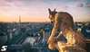 Daemon (A.G. Photographe) Tags: paris france french europe eiffeltower evil notredame gargoyle cathédrale toureiffel ag demon capitale chimère français gargouille parisian goldenhour anto xiii parisien démon antoxiii agphotographe