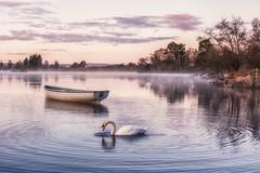 Swan at sunrise (Katherine Fotheringham) Tags: mist bird scotland boat swan fishing loch rusky