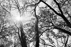 Ilford XP2 4-16 20 (LanceAdkinsPhotography) Tags: birthday street friends party portrait blackandwhite plants sun white black tree film contrast forest photo long exposure walk cincinnati group streetphotography down run grill xp2 flare ilfordxp2 ilford buiding ilfordxp2super400 super400