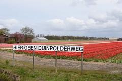 Hier geen Duinpolderweg (cklx) Tags: red holland yellow spring tulips may tulip april brightcolors tulpen noordwijkerhout tulp lisse 2016 bollenstreek hillegom wassergeest hiergeenduinpolderweg