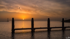 Winter sunrise (BraCom (Bram)) Tags: cloud sun holland reflection bird netherlands clouds sunrise canon widescreen jetty nederland wolken pole nl 169 beacon zon vogel ouddorp moring wolk zuidholland goereeoverflakkee meerpaal paal grevelingen steiger spiegeling southholland zonsopkomst brouwersdam baken canonef24105mm bracom springersdiep canoneos5dmkiii