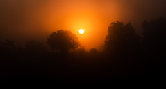 Rising sun (Olof Virdhall) Tags: morning trees red sky sun canon rising dawn early outdoor eos5 bloodred