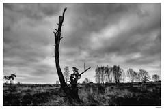 Velp/Rozendaal; Rozendaalse veld (Fred van Daalen) Tags: netherlands veluwe veluwezoom gelderland velp rozendaal rozendaalseveld