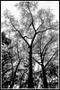 Siluetas de invierno (edomingo) Tags: bn nikond90 edomingo nikkor1685vr