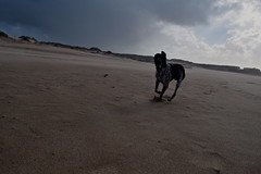 DSC_0250 (vanderweydenjakkesarabeth) Tags: ocean road trees sea sky plants dog sunlight castle beach dogs nature weather strand happy sand blauw day cloudy fort stormy running hond sandstorm lucht guincho dier grijs zand darkdays cloudyweather