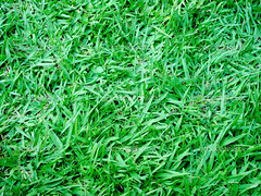 grass texture (juliocezargomes1) Tags: park new summer wallpaper plant abstract color detail macro green texture nature beautiful field grass sport closeup yard garden landscape outdoors spring healthy flora pattern play natural bright gardening outdoor cut background lawn meadow ground fresh course growth area land backgrounds environment rough agriculture grassland turf textured mowing vitality