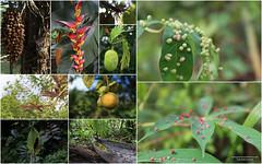 plants belize (www.provincecanadienne.com) Tags: flowers colors fleurs couleurs belize tropic tropicales