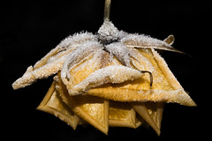 The last rose (hanspartes) Tags: winter flower macro ice rose yellow blumen gelb garten