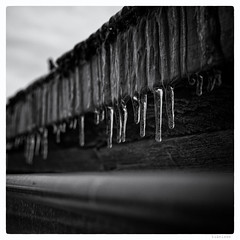 037/366 black white day (wideness) Tags: roof blackandwhite 35mm square icicle fujifilm gutter february entwicklung 2016 alpinehut blackwhiteday 366dayproject fujifilmxe2 fujinonxf35mmf2rwr 366the2016edition 3662016