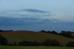 DSC04670 (wheelsy1) Tags: walking derbyshire poppy chesterfield sheepbridge poppyfield unstone richardwiles