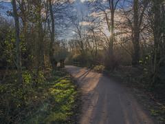 Sun, Shadow, Trees & Path (Ian M Bentley) Tags: uk trees england sunlight woodland northampton shadows path february om woodenbridge 1250mm stanwick stanwicklakes olympusomd olympusmzuiko olympusm5