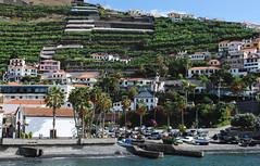 Camera De Lobos - Madeira (Mark Wordy) Tags: island village harbour terraces fishingboats madeira camaradelobos