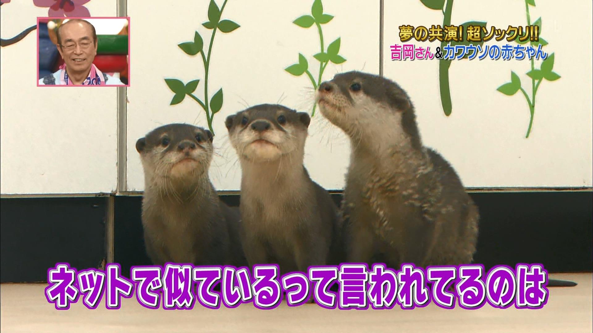 2016.02.27 全場(天才!志村どうぶつ園).ts_20160227_210859.676