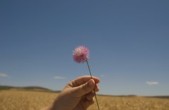 "6 (adrizufe) Tags: nature nikon d70 nikonstunninggallery olmillosdesasamon ""flickraward"""