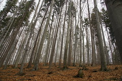 Forest on Skalica Hill (Stimoroll) Tags: trees mountains forest poland hills atumn silesia slask beskidy ustron beskid besid cityofpoland