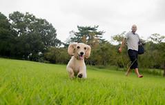 IMG_3127 (yukichinoko) Tags: dog dachshund 犬 kinako ダックスフント ダックスフンド きなこ
