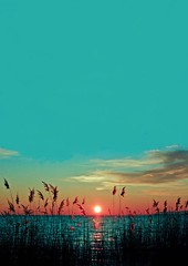 Sunset (ella es zara) Tags: flowers sunset sun sunlight love me relax landscape happy flickr