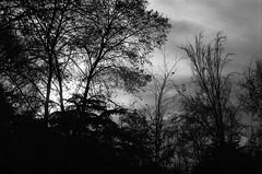 Mini serie / Melancola y Siluetas (Sentamashi) Tags: bw film nature 35mm dark landscape 50mm poetry darkness atmosphere bn ambient romantic sombras siluetas grano contrastes polvo atmsfera pelcula potico gtico romntico luznatural