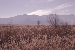 winter landscape by ioanna papanikolaou (joanna papanikolaou) Tags: travel trees winter mountains reed nature leaves rural reeds landscape outdoors scenery soft view natural wind background bare scenic peaceful dry nobody scene greece pasture valley land serene dried scape tranquil prespes