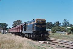 7701B-38 (Geelong & South Western Rail Heritage Society) Tags: last train australia victoria aus tclass beechworth