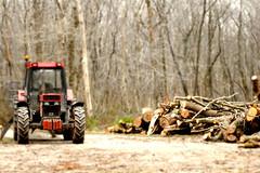 (vieubab) Tags: nature hiver arbres campagne extrieur chemin fort bois calme tracteur tiltshift troncs branchage