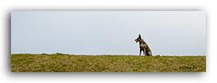 Lotta (1) (K_Rahn) Tags: schnee winter outdoors spur klein frost power outdoor jahreszeit natur verschneit hund ohr bewegung kalt sonnig schatten haustier sss nase spiel maul tier aktion laufen spielen klug welpe sportlich spas weis wildnis rasse sugetier hbsch junger lieblich hundesport drausen dynamisch erwachsener fusabdrcke