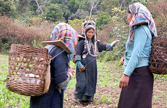 Akha girls and a married woman on the trail (Laura Jacobsen) Tags: laos hilltribe akha phongsaly phongsali