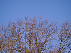 P2295368 (Paul Henegan) Tags: trees winter sky goldenhour earlymorninglight