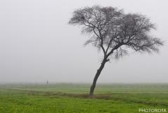 MISTY MORNNING (PHOTOROTA) Tags: pakistan weather misty flickr punjab abid mornning photorota