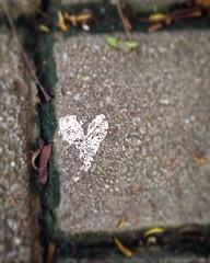 (Nadia Starikoff) Tags: love amor corao corazon caminho ndiastarikoff
